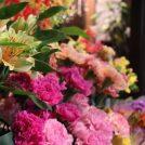 円山で50年!暮らしに彩りを「SAPPORO FLOWER & CAFE」