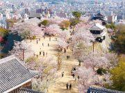 愛媛県下20市町イチオシ わがまち自慢の今すぐ行きた〜いお花見スポット