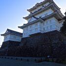 小田原城址公園の桜とまちの博物館