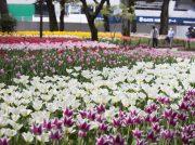 花と緑が横浜を彩る「ガーデンネックレス横浜2019」開催!