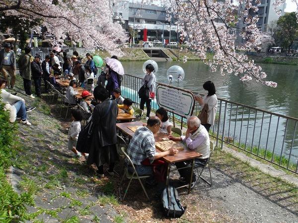 2018 隼人池公園 桜まつり (3)