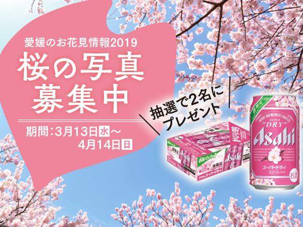 街で見つけた、おでかけした桜の写真を投稿しよう♪ビールのプレゼント付