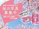 【プレゼント】桜の写真をシェアして応募!みんなでつくる愛媛のお花見情報2019