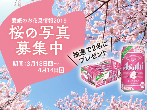 livingweb_feature_sakura