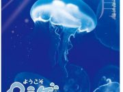 特別企画展「ようこそクラゲ」6/30(日)まで 相模川ふれあい科学館 アクアリウムさがみはら