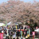 2019 桜まつりへ出かけよう!町田・相模原