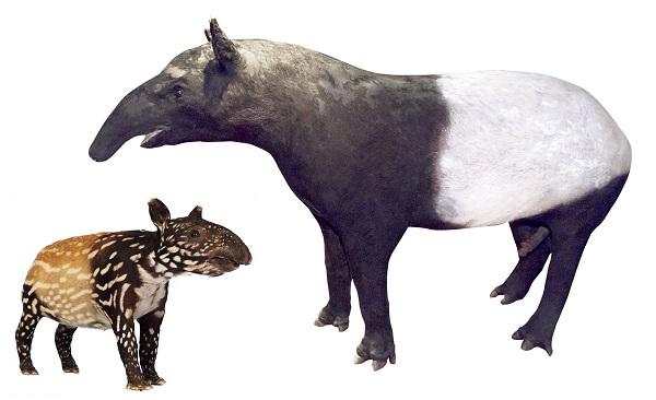 mammal-2-12