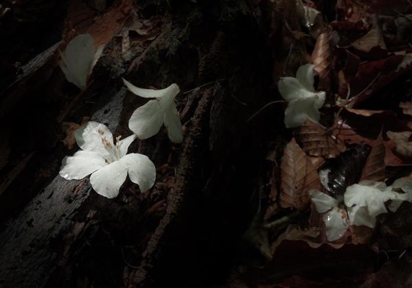 Yoshie 「ちょっと森においでよ」XVI 森の仲間の写真展