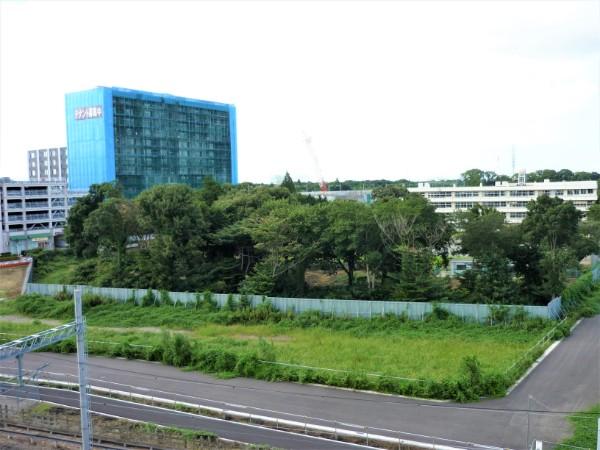 ootakanomori-sakura06-2008