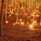 横浜国際プールで第12回竹灯籠まつり 幻想的な世界を体験しよう!