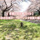 【多摩のお花見2019】「桜が見られるスポット」のインスタ写真、大募集