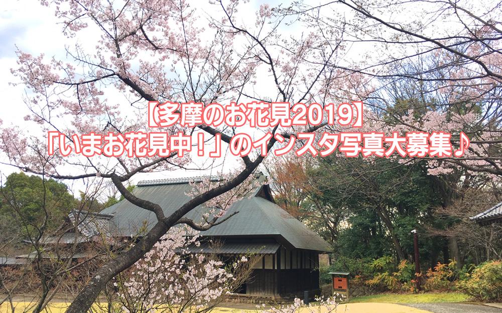 多摩のお花見2019