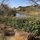 自然が大事に生かされている 実籾本郷公園 @習志野