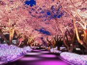 祝・新元号「令和」制定キャンペーン中!桜満開のよみうりランドへ