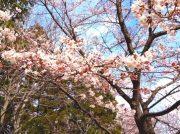 【仙台市泉区】桜の名所!長命館公園【駐車場有】