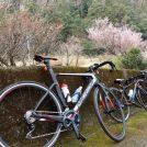 「いばらきの山とまちをつなぐサイクリングツアー」で里山風景を楽しむ