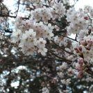 【倉敷】1歳の息子と行く酒津公園 カメラ片手にお花見デート