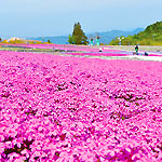 GWに出かけたい!絶景のお花畑スポット10選