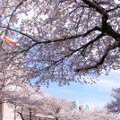 平成最後の桜めぐり ~青葉区編~