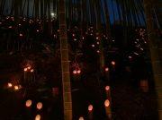 北山田 横浜国際プールの竹林に星が降りてくる竹灯篭まつり