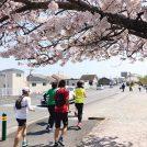 桜の名所を走って巡ろう!! 渋滞知らずの時短お花見@湘南平塚〜大磯