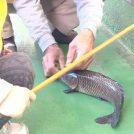 【小山市】雨でもOK!金魚も釣れちゃうミッキーフィッシングセンターは屋内釣り堀