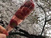 桜・さくら・サクラ@平成最後のお花見♡