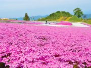 GWに出かけたい!絶景のお花畑スポット【2019年・東海の名所10選】