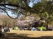 船橋・県立行田公園でボール遊び&のんびりお花見散歩