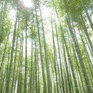 【宇都宮】あの有名映画のロケ地で筍狩り体験!「若竹の杜 若山農場」