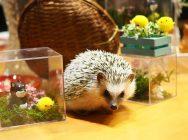 【美観地区】動物好き必見!倉敷動物の森~触れて、撮って、癒されて~