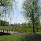 【守谷】家族でのんびり近場ピクニック。歴史・城好きにも! 守谷城址公園