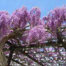 季節の花に癒される 手賀沼沿いの散策コース【我孫子市水生植物園】