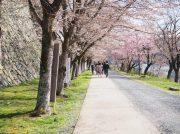 【津山】見ごたえある花見がしたい方必見!1000本の桜が咲く鶴山公園