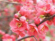 【足利】チューリップにユキヤナギ!足利フラワーパークで春の花々を満喫♪