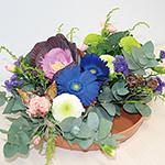izumi_flower_5446