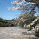 【4月14日】歌手・北山たけしさんのステージ、戦隊ショー、フリマと満載「花瀬公園まつり」夜のライトアップも!