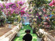 【長島町】花フェスタ開催中!鮮やかな花々に癒される「長島ブーゲンビリアの丘」