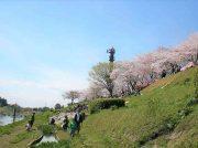 4月6、7日は運河桜まつり。グルメな屋台や多彩なライブを満開の桜の下で