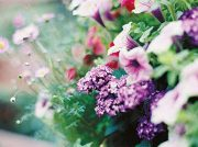 11日まで開催のグループ展へ出掛けませんか? 4人の女性が表現した「花」がいっぱいです