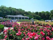 ― 初夏のバラ園へ― 今週は花をめでにでかけよう