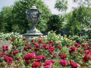 愛でる・味わう・薫る 心を満たす春のバラ
