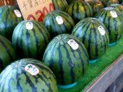 【青葉区上愛子】新鮮な野菜と果物【森の駅】