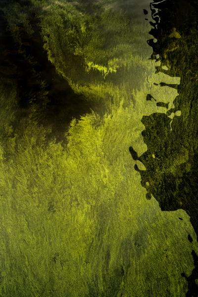 細胞の海、神経の森(メイン) (1)
