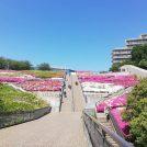 北山田 横浜国際プールのつつじは一見の価値あり!