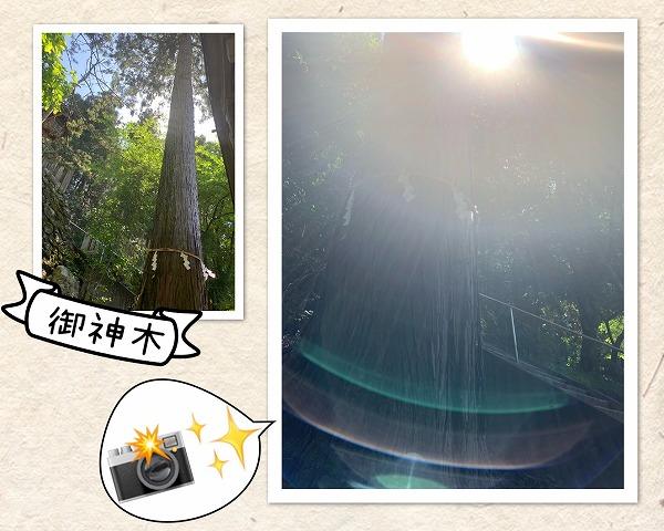 御神木と光画像