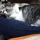 大好きがとまらない猫