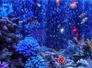 幻想的な夢の世界!!水と光のテーマパーク「アクアテラス錦ヶ丘」