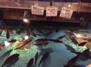 【渋谷】子どもも大人も楽しい!「ざうお渋谷店」自分で釣った魚に舌鼓!