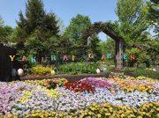 やくらいガーデンはお花がいっぱい!イースターフェアは5月26日まで